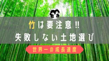 竹藪の土地は購入注意!竹の成長速度は世界一です。